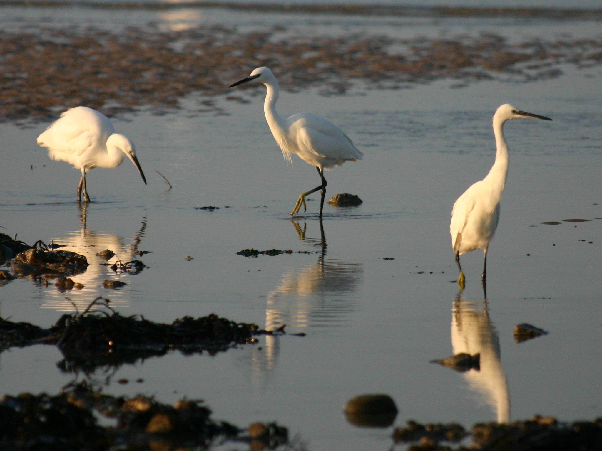 vols d oiseaux au dessus de la mer